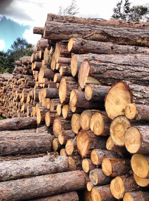 Дървен материал - Трупи