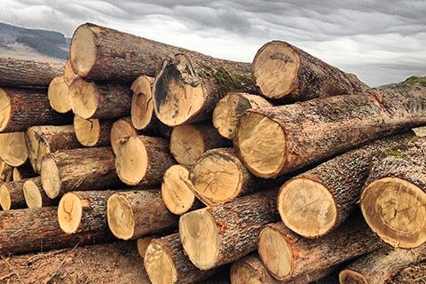 Добив на дървесина